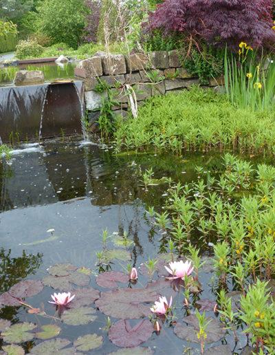 Lansmann: Gartenteich Bepflanzung