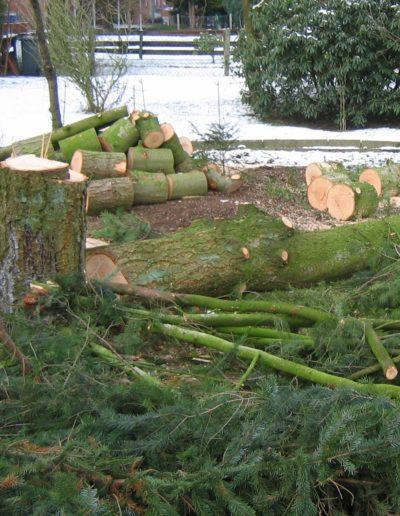 Lansmann: Baumfällung mit direkter Verarbeitung in kamingerechter Scheidlänge