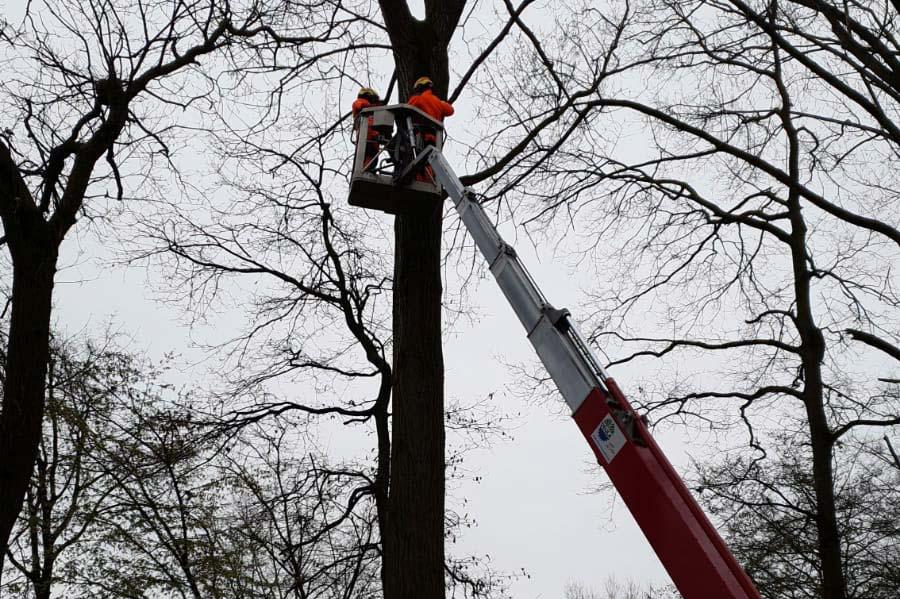 Lansmann: Baumpflege