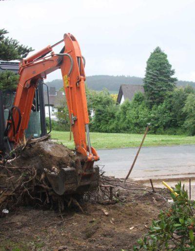 Lansmann: Rodungsarbeiten Vorgarten
